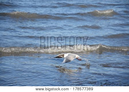 bird go away from the water on a suny day