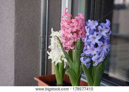 mi grandma flowers cool aha aha ah