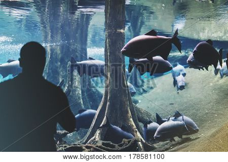 Outline person. View from back tourist traveler on background blue sea aquarium. Person hiker in oceanarium museum Barcelona and photographer pictures fish smartphone mockup