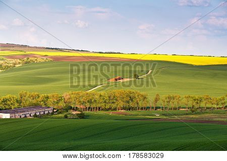 Spring Farmland On Hills. Green And Yellow Spring Fields