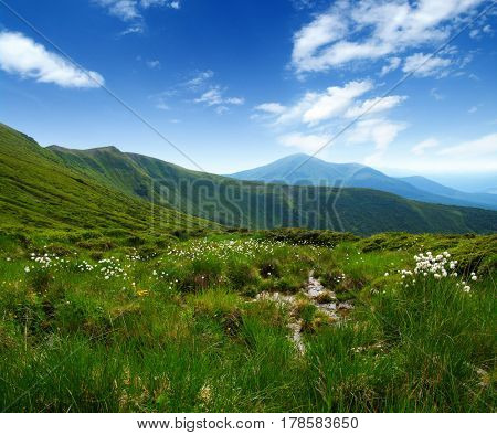 Mountain landscape in the summer