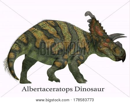 Albertaceratops Dinosaur Tail with Font 3d illustration - Albertaceratops was a herbivorous Ceratopsian dinosaur that lived in Alberta Canada in the Cretaceous Period.