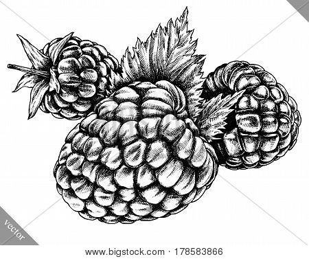 Engrave raspberry hand drawn graphic illustration vector art