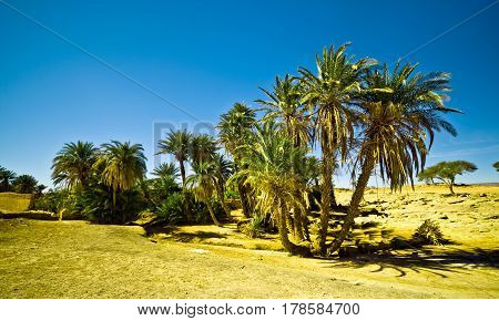 oasis in the Sahara desert in Morocco with palm trees