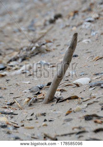 vertical shot of stick in beach sand among sea shells