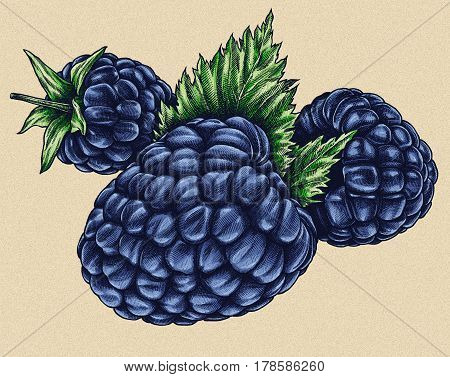 Engrave BlackBerry hand drawn graphic illustration art