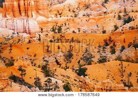 Thin vegetation of sandstones and rocks at Bryce Canyon National Park, USA