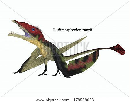 Eudimorphodon Resting with Font 3d illustration - The carnivorous Eadimorphodon was a pterosaur flying reptile that lived in Italy in the Triassic Period.