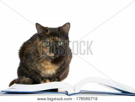 Portrait of one Tortie Torbie Tabby cat with green eyes reading a book isolated on white background. crouched down on book.