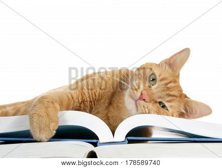 close up of one orange ginger tabby cat laying on a large book with one paw over the edge holding the pages looking directly at viewer. Heat sideways laying on book.