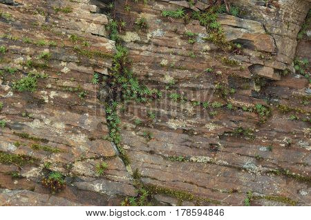 Texture of a rock with plants. Natural abstraction