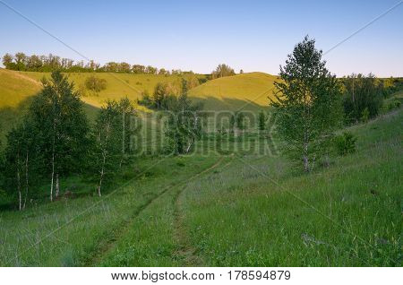 Summer landscape with green hills and birch forest