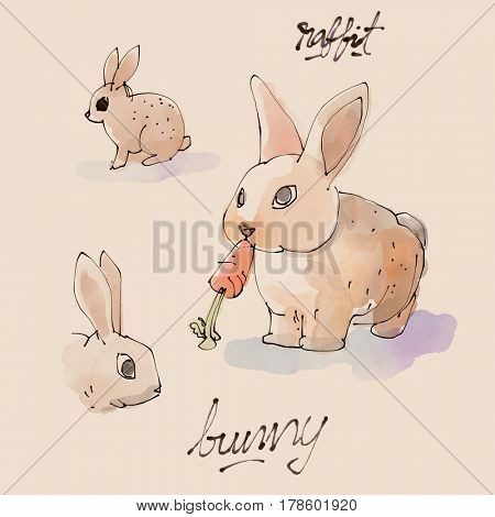Bunny Watercolor illustration