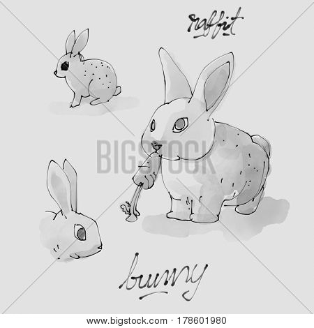 Bunny Watercolor illustration