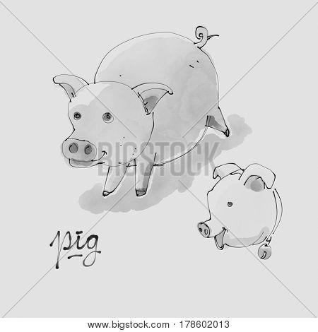 Pig Watercolor illustration