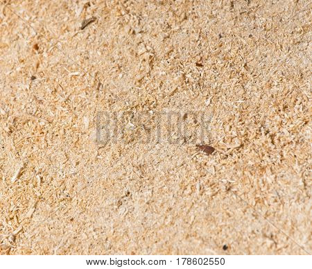 A sawdust as background .A Photo texture