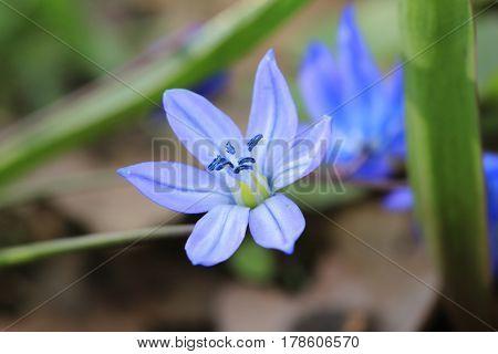 nice wild blue flower - macro shoot