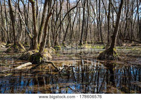 spring landscape on bog in forest