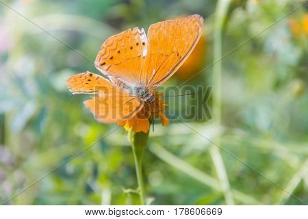 Soft focus Butterfly on flower. Butterfly on the green leaf. Abstract beautiful light from sunshine.