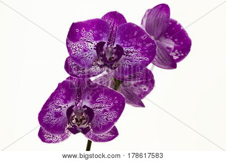 Beautiful branch of orchids on a white background