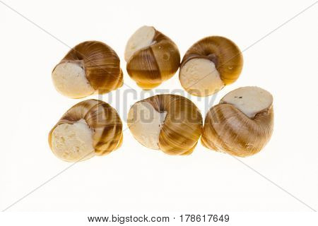 Escargot, escargot shells with butter and spices closeup on white background