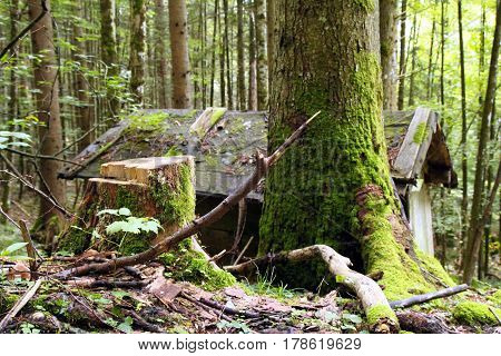 Travel To Sankt-wolfgang, Austria. The Green Tree And The Wooden Hut In The Forest.
