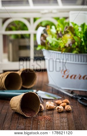 Planting - seeds, onions with garden tools and fresh salad