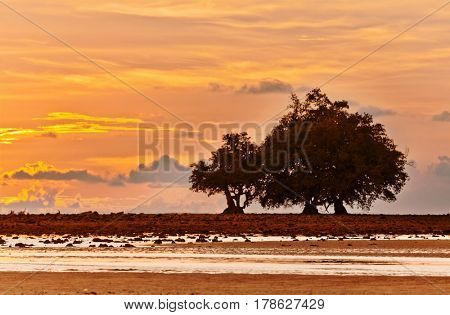 Tropical beach at beautiful sunset with tree silhouette . Nature background