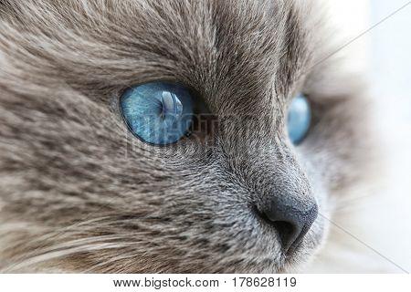 Cute cat at home, closeup