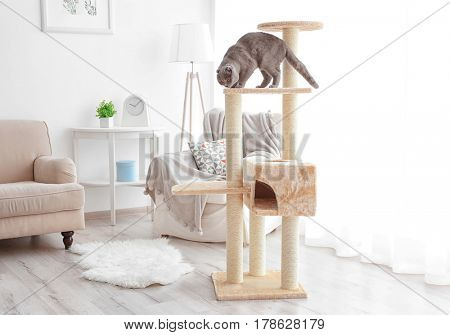 Cute funny cat playing on tree at home
