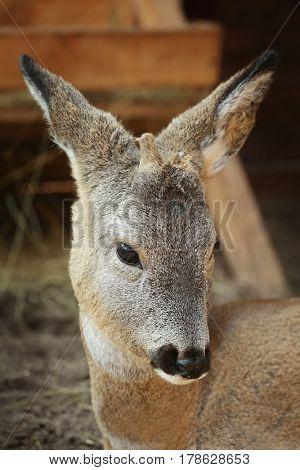 Cute funny deer in zoological garden, closeup
