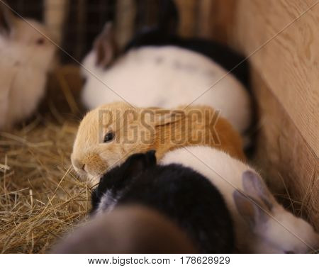 Cute funny rabbits in zoological garden