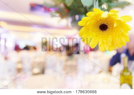 Isolated yellow gerbera flower on table in restaurant