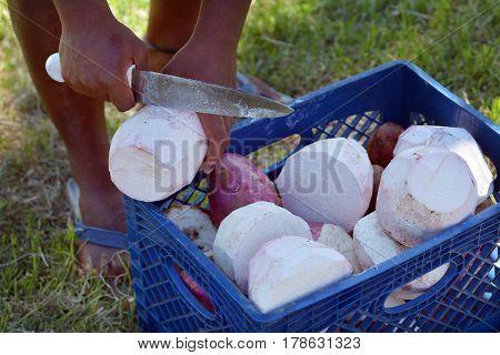 Man Slicing Taro