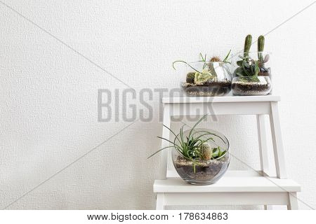 Succulent gardens in glass vases on step ladder