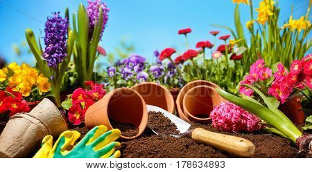 Gardening tools and flower in the field