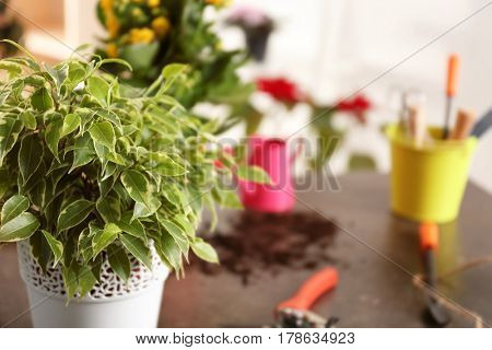 Fresh spring plant with gardener equipment on table