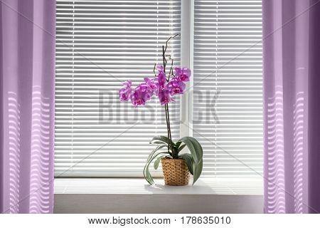 Beautiful orchid on windowsill