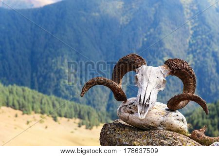 Skull Of Ram On Pagan Shrine In Shenako Village. Tusheti Region. Georgia