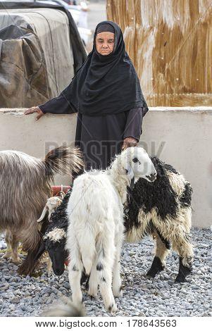 Nizwa Oma 24th March 2017: old Omani woman at Nizwa goat market with her goats
