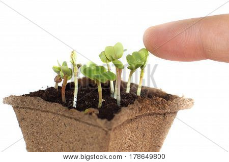 Sprouts in the ground fingers touching the young shoot of the plant