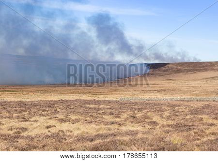 Controlled burning of wild heather on moorland