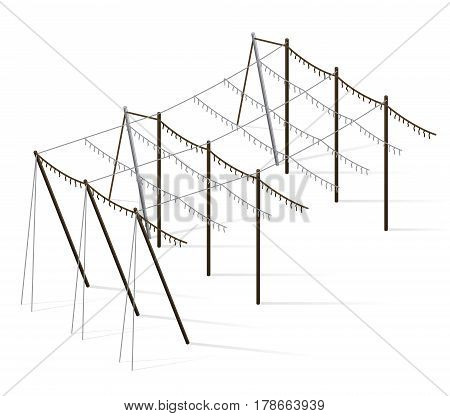 Hopgarden landscape in spring in isometric view. Agriculture landscape with husbandry industry. Construction of beams and wires for growing hops. Hop garden constructions in rows on green farm field.