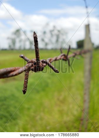 Old Stock Photo: Barbed wire with shallow depth of field (dof). Macro shooting