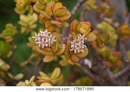 Flowers, Succulents, Spain