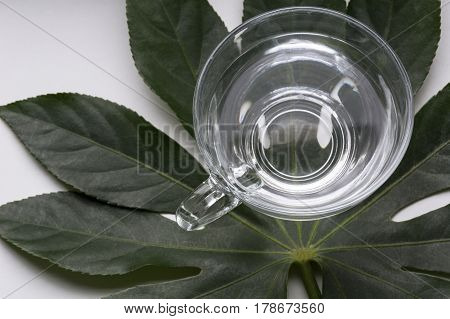 One cup of water is on the green leaves
