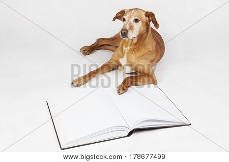 Brown dog lying by an open book. Animals training, education, erudition.