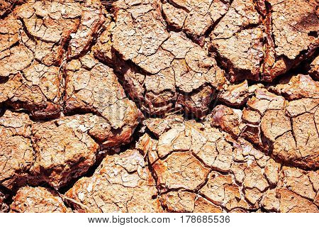 The surface of dry soil cracked in summer.