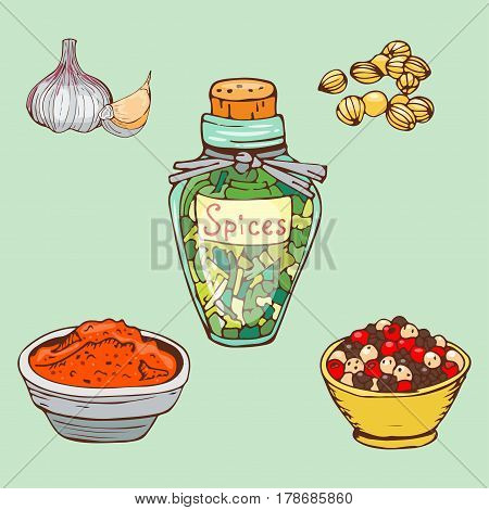 Spices seasoning hand drawn style food herbs elements and seeds ingredient cuisine flower buds leaves food plants healthy organic vegetable vector illustration. Fresh aroma aromatic spicy design.