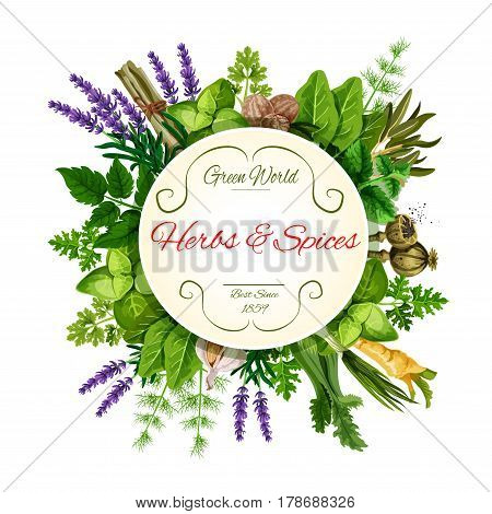 Fresh herbs and spices round label. Green mint, basil, thyme, parsley, garlic, onion, dill, fennel, nutmeg, celery, sorrel leaf, lavender and poppy flowers frame with copy space for food design